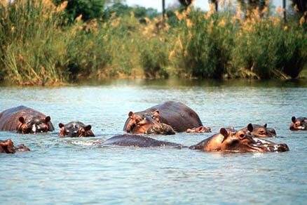 Adventurer Guided Mobile Okavango