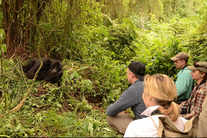 Adventurer Uganda's Fly-In Gorilla Trek