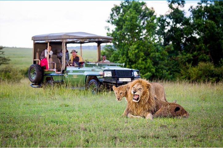 Africa's Masai Mara, Vic Falls & Cape Town