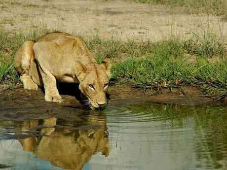 Africa's Masai Mara, Vic Falls, Kruger & Cape Town