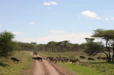 East Africa's Kenya & Tanzania Migration