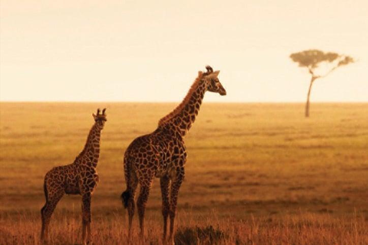 East Africa's Masai Mara, Serengeti & Zanzibar