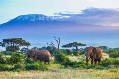 East Africa's Tanzania & Kenya