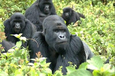 East Africa's Tanzania Migration & Uganda Gorillas