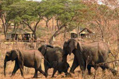 Family Zimbabwe's Falls, Hwange & Kariba