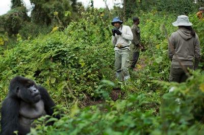 Fly-In Uganda Gorillas, Culture & Wildlife