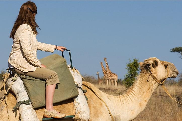 Kenya's Adventurer Samburu Camel Safari