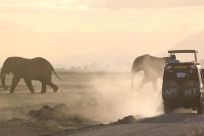 Kenya's Amboseli, Meru & Mara