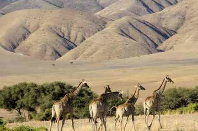 Namibia Wildlife, Himbas & Dunes