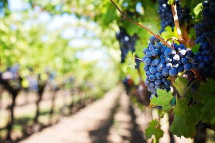 Romantic Cape, Winelands & Kruger