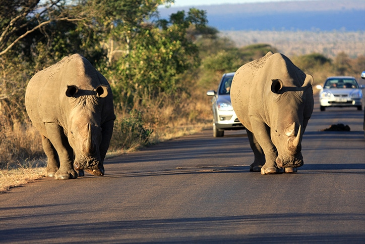 Self-drive South Africa's Kruger & Panorama - African Safari