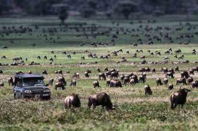 Serian's Serengeti Mobile – Kusini