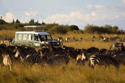 South Africa's Kruger & Kalahari