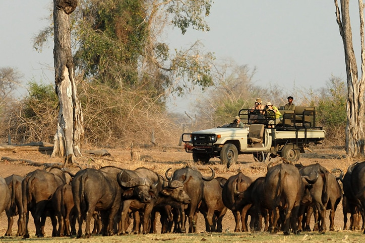 South Luangwa's 4×4, Walking & Bike Safari