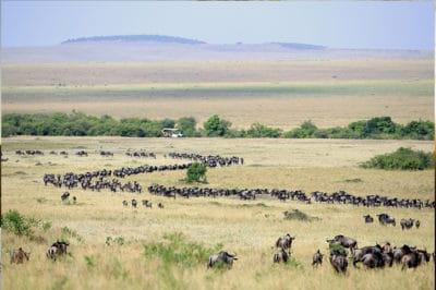 Tanzania's Tarangire, Crater & Migration