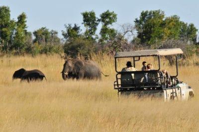 Zimbabwe's Family Hwange, Kariba & Falls