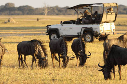South Africa Safari